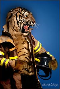 tijger man.