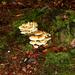 Ede, de Syssel, 1 okt. 2009 023 (17)