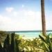 Caraibische zee