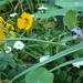 nog steeds bloemen in de groententuin