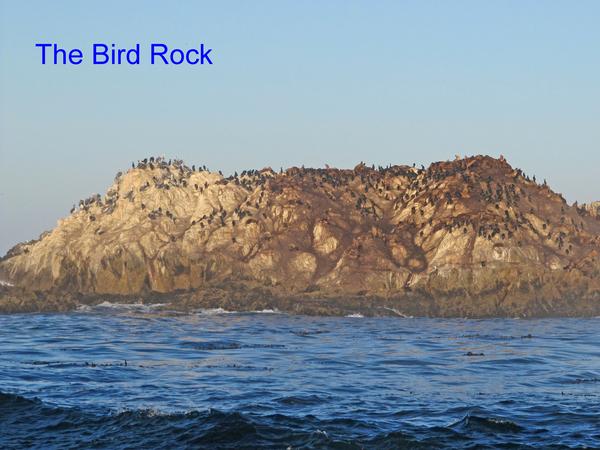 17  miles drive  -  Bird Rock