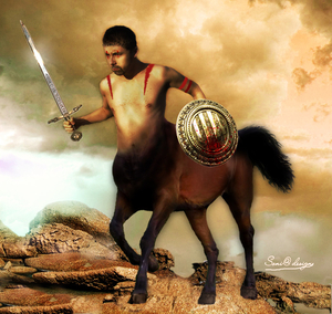 paardeman-