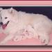 Bouchka met puppy's 08-98