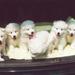 3de nestje, 7 op een rij in de auto