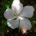 20 bloem