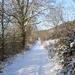 2009_12_19 Romedenne 016  Bois de Marmont