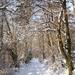 2009_12_19 Romedenne 020  Bois de Marmont