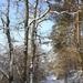 2009_12_19 Romedenne 021  Bois de Marmont
