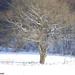 2009_12_19 Romedenne 025  Bois de Marmont