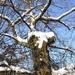 2009_12_19 Romedenne 026  Bois de Marmont