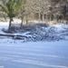 2009_12_19 Romedenne 029  Bois de Marmont