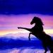 Paard zonder lijst