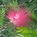 tropische bloeiende plant