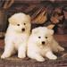 2 Jonge hondjes