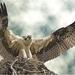 adelaar op nest
