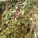2010_02_07 Dinant 32