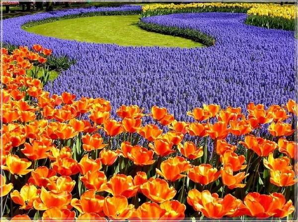 Zeelandbloemen – Nederland