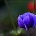 blauwe bloembol