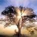 boom in zonlicht
