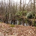 2010_03_28 Buggenhout 32 Lippelobos