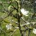 2010_04_18 Walcourt 19