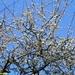2010_04_18 Walcourt 28