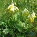 2010_04_25 Romedenne 031