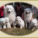Familie A 13.8.2003