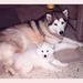 Paska& pup Bouchka vriendjes