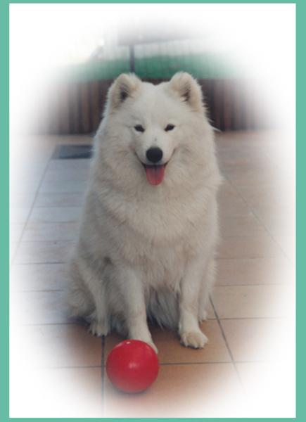 Bouchka met bal