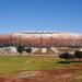 Toeval : Stadion Johannesburg