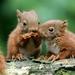 eekhoorntjes eten