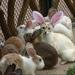 poesje met konijnenoren
