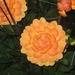 fotos Bredene 2007 030