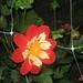 fotos Bredene 2007 038