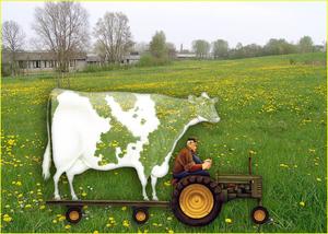 doorzichtige koe gemaakt