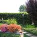 tuin in de zomer, juli 2010