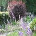 een beetje Provence in onze tuin, juli 2010