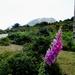 2010_06_20 Corsica 122 Col de Sevi