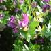 2010_06_20 Corsica 144 Marina Viva Porticcio