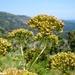 2010_06_24 Corsica 062 Col de Ste Lucie