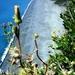 2010_06_24 Corsica 119 Nonza