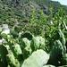 2010_06_24 Corsica 123 Nonza