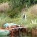 Le Canal du Midi (1)