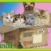 een volle doos katten