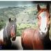 paarden (2)
