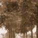 Grote Steenweg in 1918