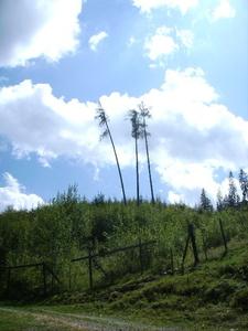 Het woud sterft uit