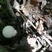 2010_09_05 Doische 79