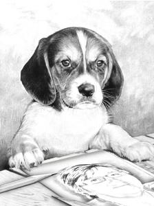 Arlette hond